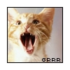 Screaming Cat Avatar